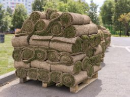 Rolls of lawn on a pallet. Landscaping of streets and parks.